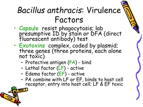 PPT - Bacillus PowerPoint Presentation, free download - ID