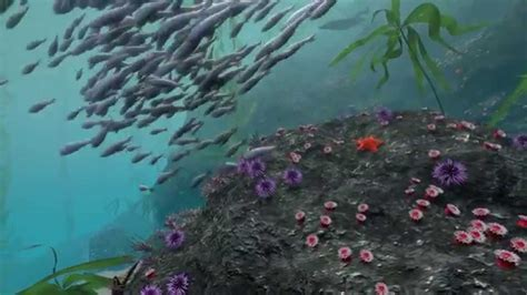 Video: Take a Virtual Dive in a Kelp Forest | Habitat Earth